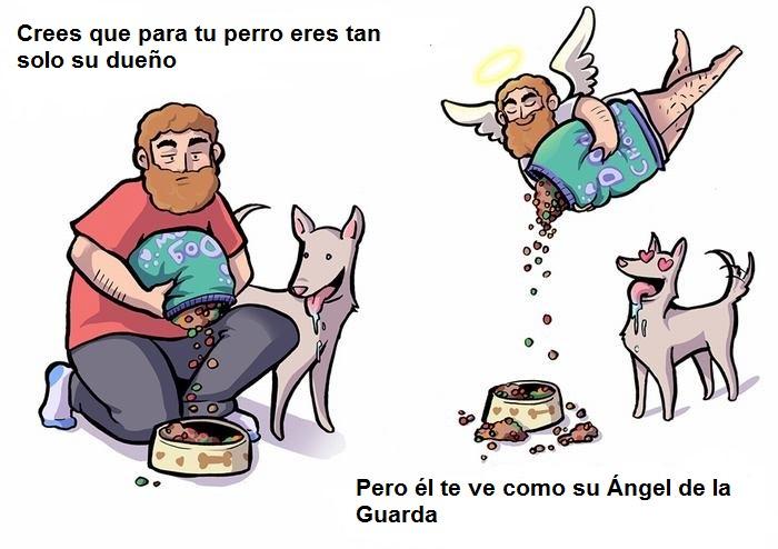 cómo nos ven nuestros perros