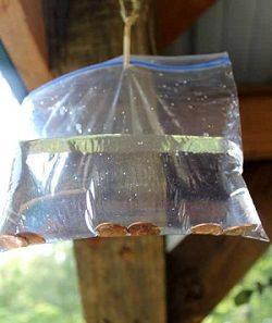 remdios naturales moscas