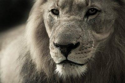 chiste domador leones