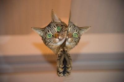 Chiste: Ladrines y gatos