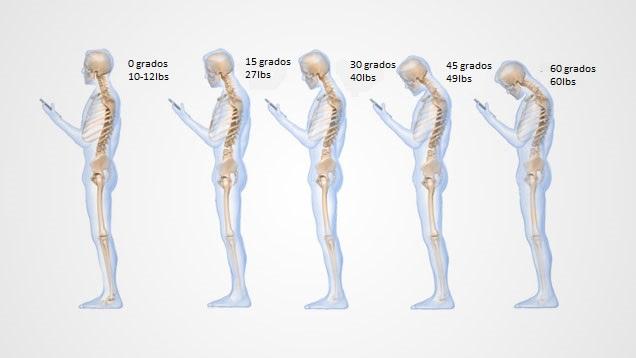 Columba vertebral