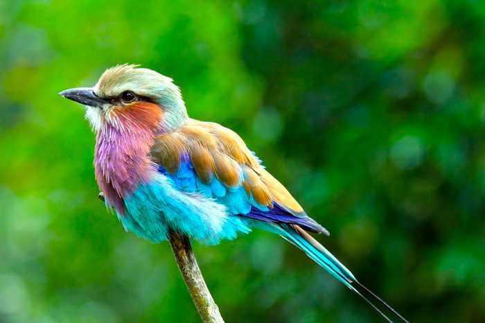 Animales Coloridos