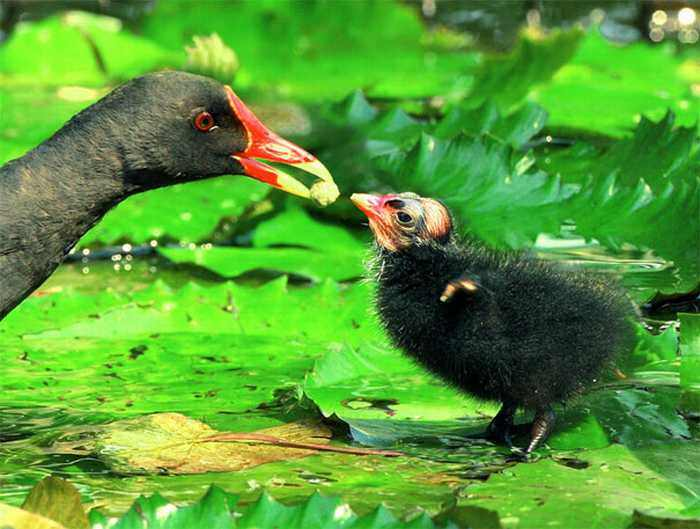 Fotos Pájaros de Taiwán