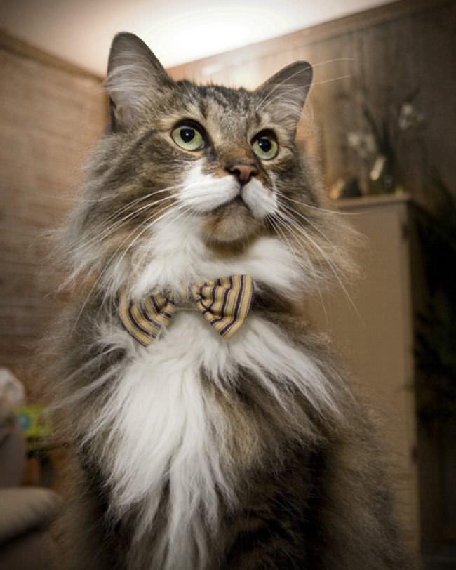 Gatos Fashion