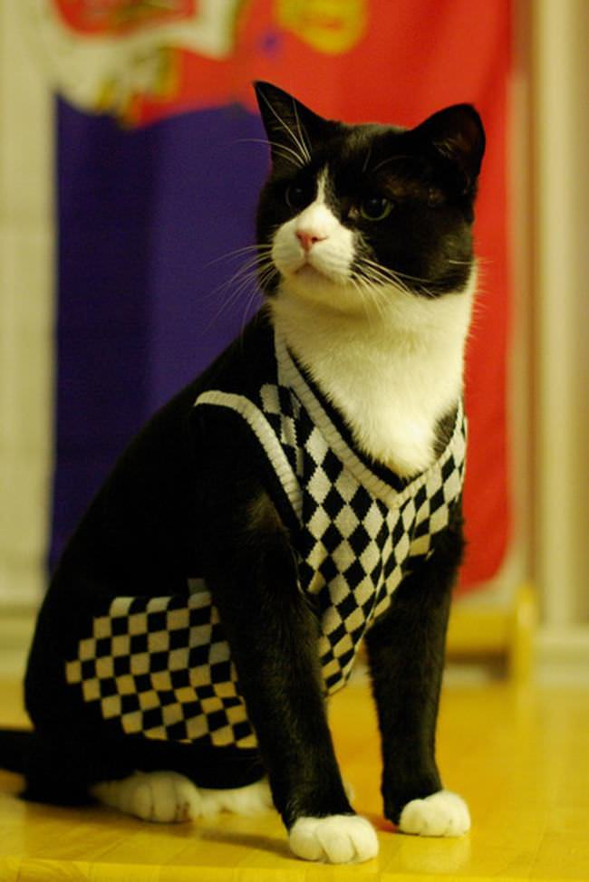 Gatos Fashion