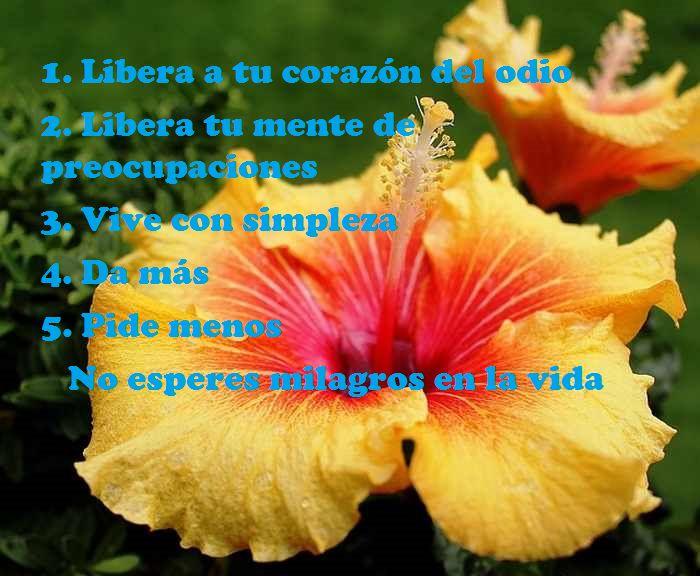 Imagenes Flores