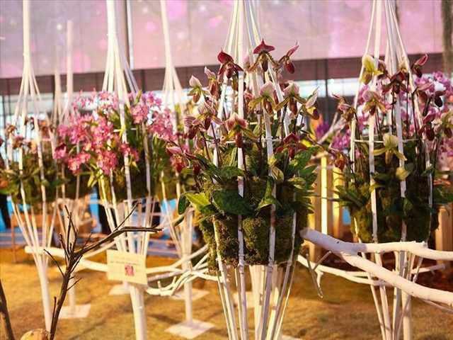 Festival de la Orquídea