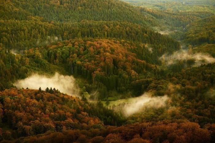 15 Bosques
