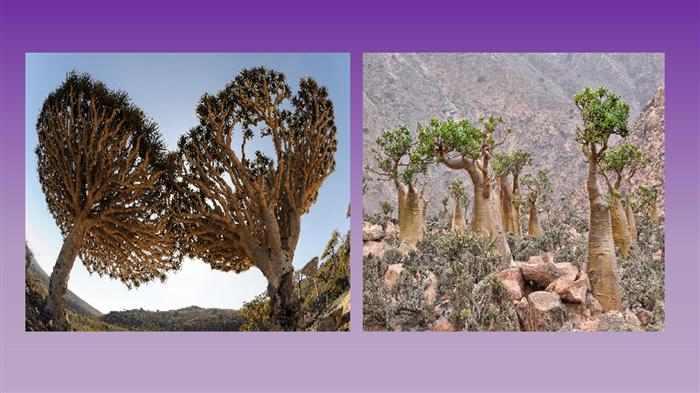 los paisajes más raros del mundo en Socotra