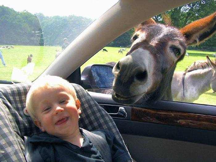 Los momentos más divertidos de los animales