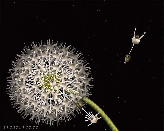 Flores humanas, la nueva manifestación artística