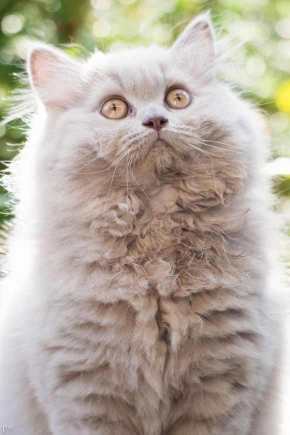Los gatos más lindos y divertidos