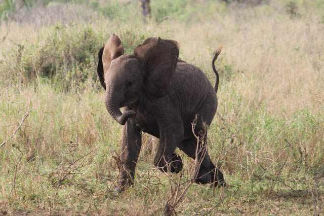 Elefantes bebes