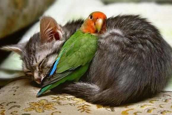 Imágenes sorprendentes de la relación entre animal