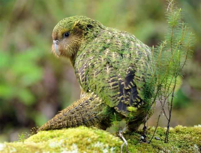 Descubre las especies más extrañas del mundo