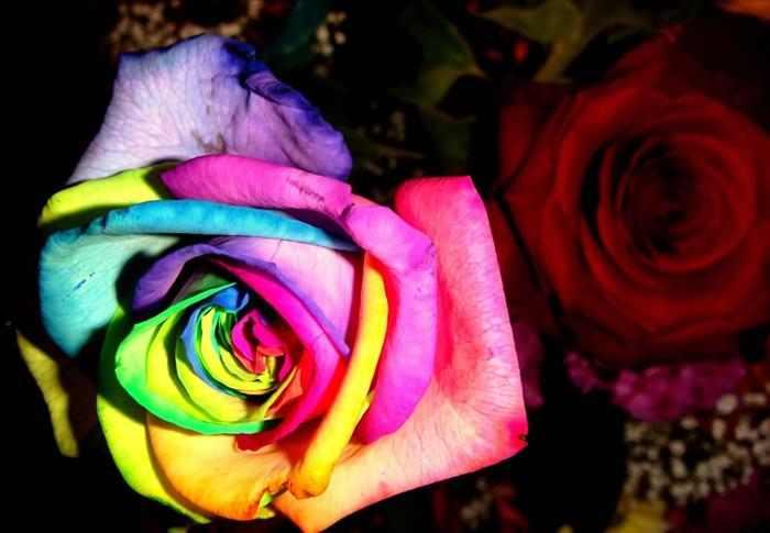 Imágenes y significados de las flores más lindas