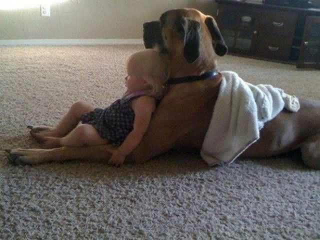 De Niños y Perros