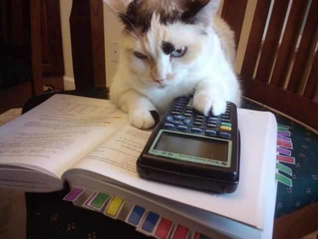 Animales estudiando