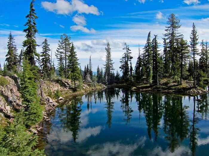 Bosques EUA