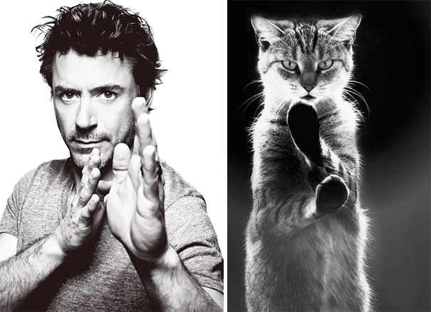 Hombres Vs Gatos
