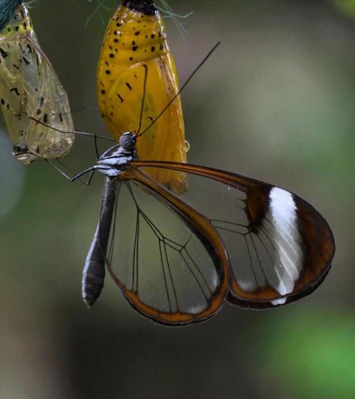 Mariposa de cristal