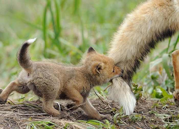 Paternidad animal