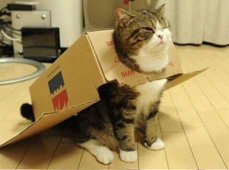 Gatos y cajas