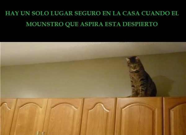 Otro dia de Gatos