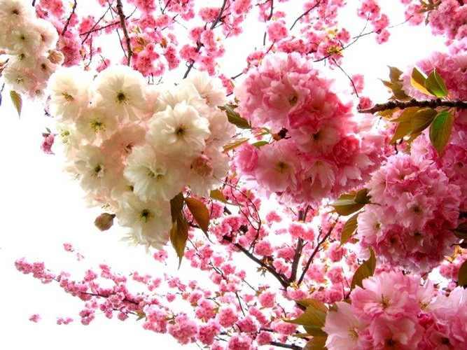 Fotos Primavera