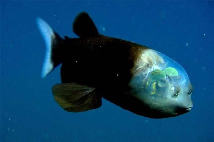 Especies Marinas raras