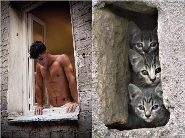 Men Vs Gato