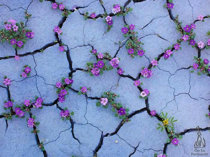 Plantas en lugares raros