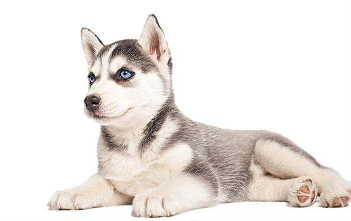 Cachorros de 6 semanas