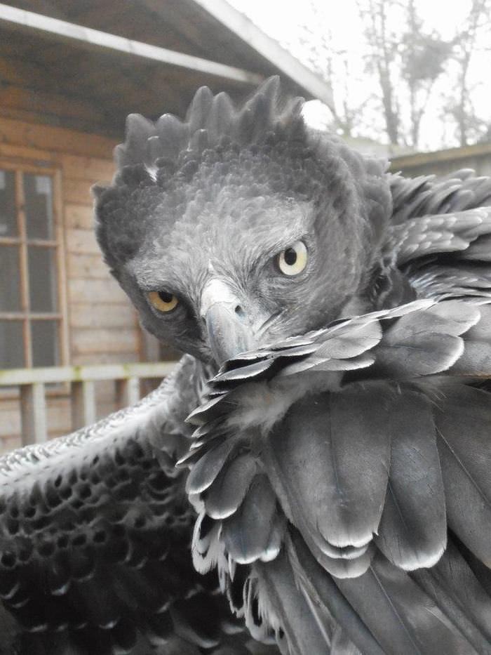 Aves de Caza