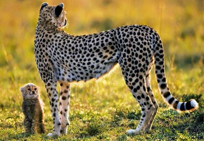 Animales Naturales