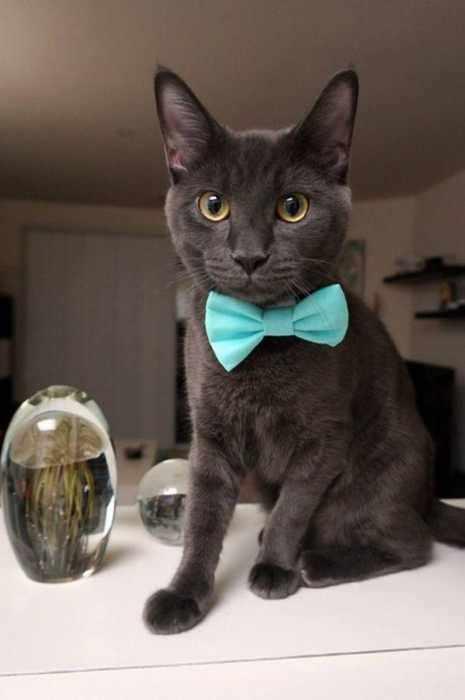 Dia de Gatos