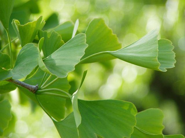 Plantas que ayudan a mejorar la vista