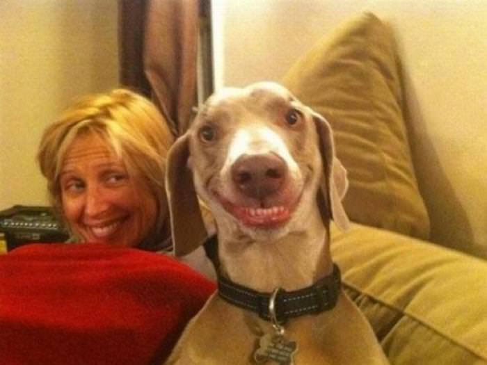 ¡Digan Wiskey! a Estos Perros Les Encanta La Cámara...