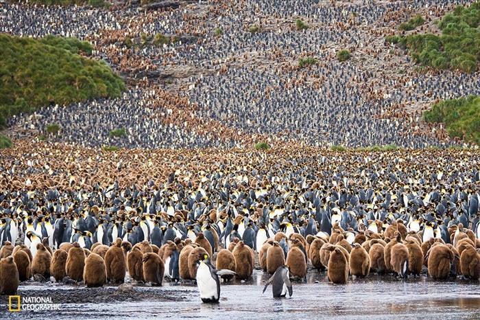 14 Fotografías de National Geographic Que Debes Ver
