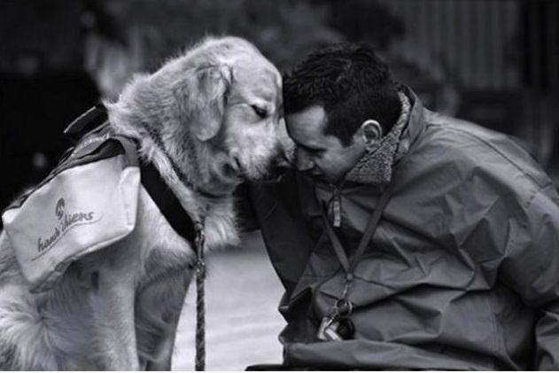 nuestros mejores amigos los perros