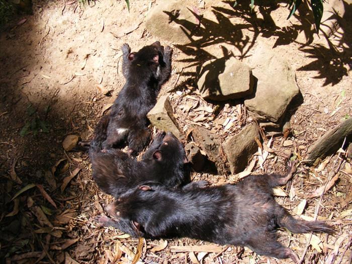 15 Adorables Bebés Animales En Australia