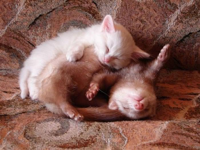 animales haciendo la siesta