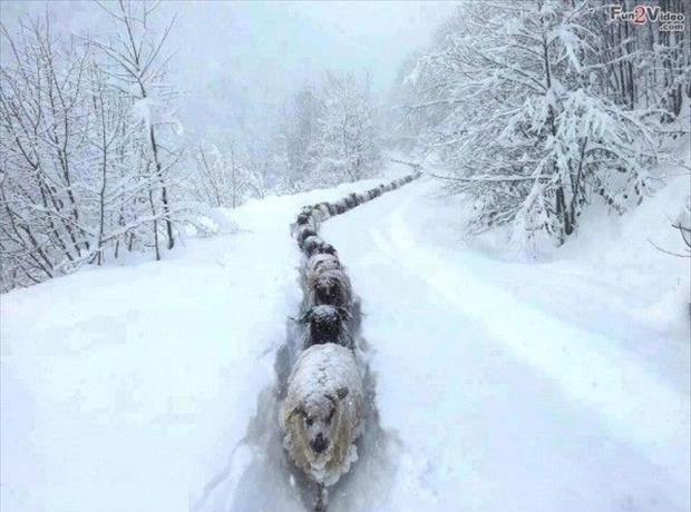 fotos invierno 15