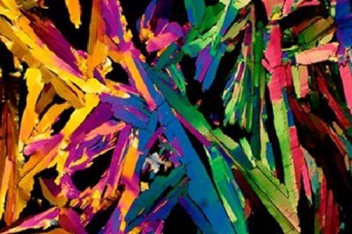 objetivos ordinarios vistos desde microscopios