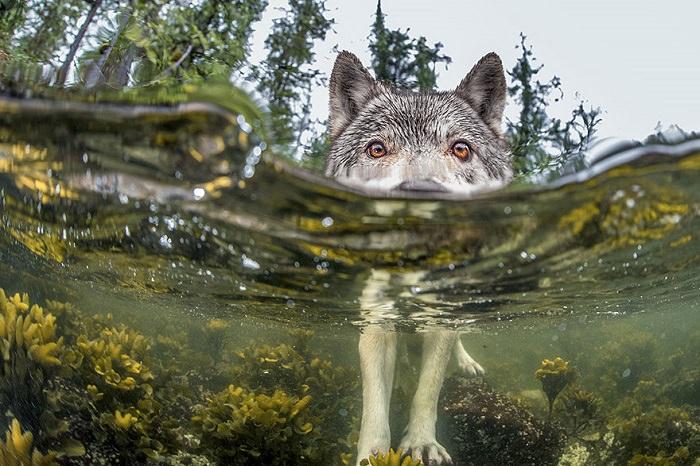 2015: Las Mejores 20 Fotografías del National Geographic