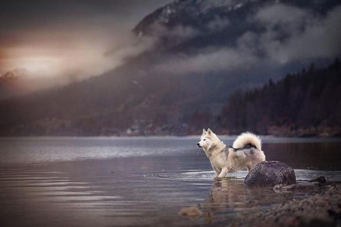 perros y naturaleza