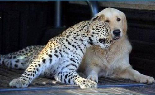 Siempre Seremos Amigos...