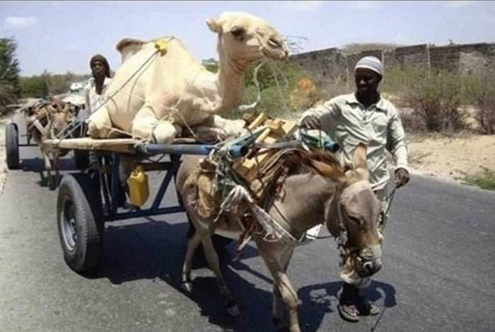 cosas que se ven solo en africa