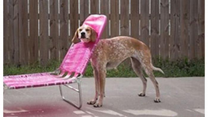 perros atrapados en insolitos lugares
