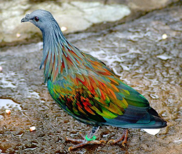 20 Animales Con Un Colorido